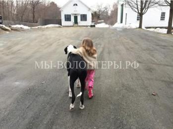 11-летняя девочка учится ходить с помощью немецкого дога