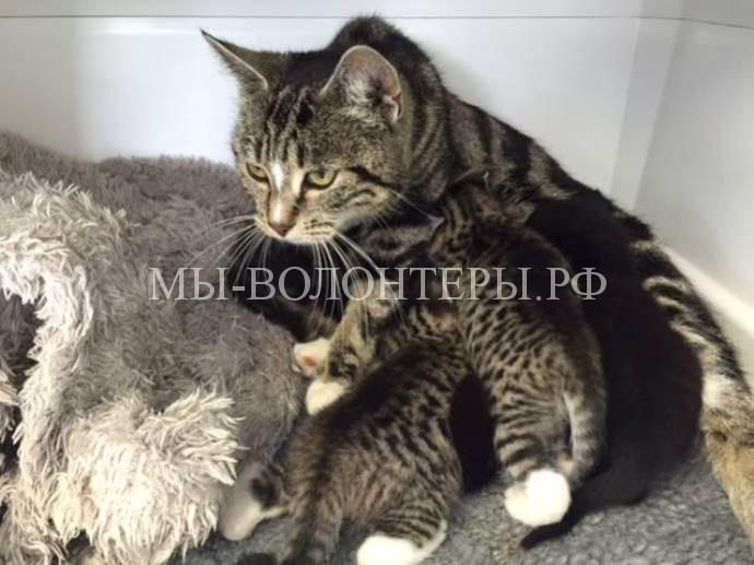 Кошка разыскала своих котят2