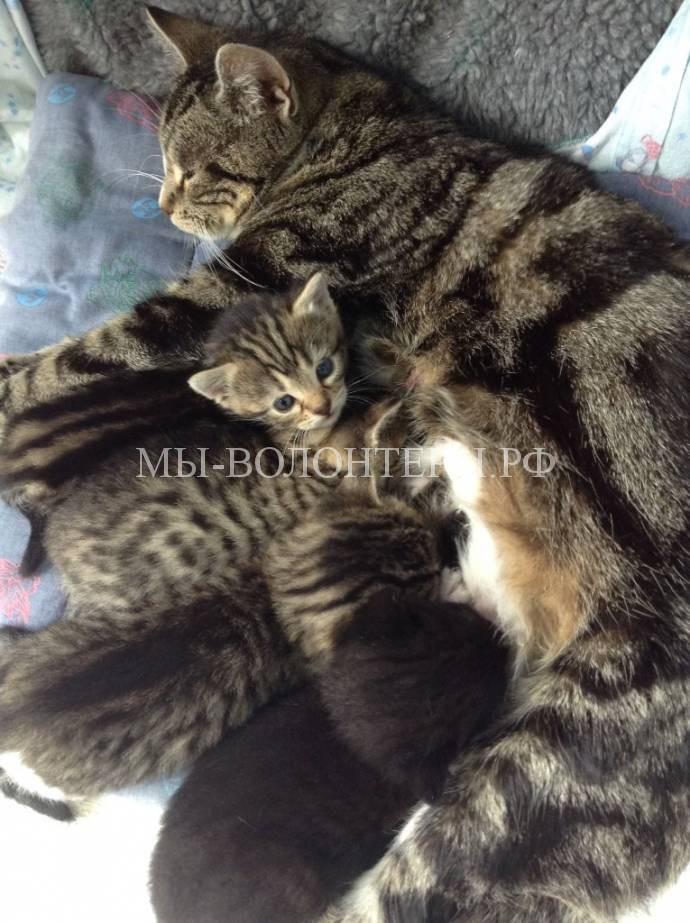 Кошка разыскала своих котят3