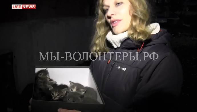 В Казани из замурованного подвала спасли кошку с котятами
