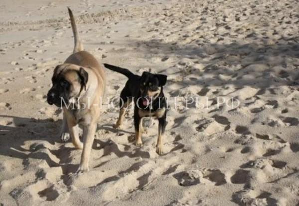 После схватки с дикобразом жизнь этих собак помогли спасти незнакомые люди