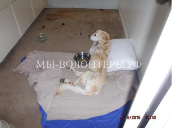 Хозяйка приюта и «зоозащитница» арестована за жестокое обращение с животными