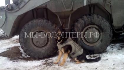 В России запустили в производство бронежилеты для собак