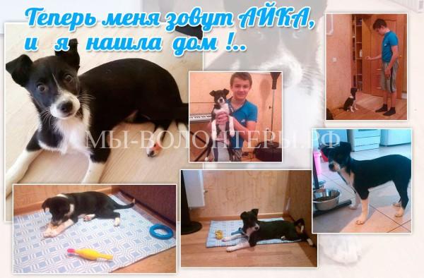 Щенок-девочка Айка  нашла свой дом, удачи всей семье Ольги  и  малышке !