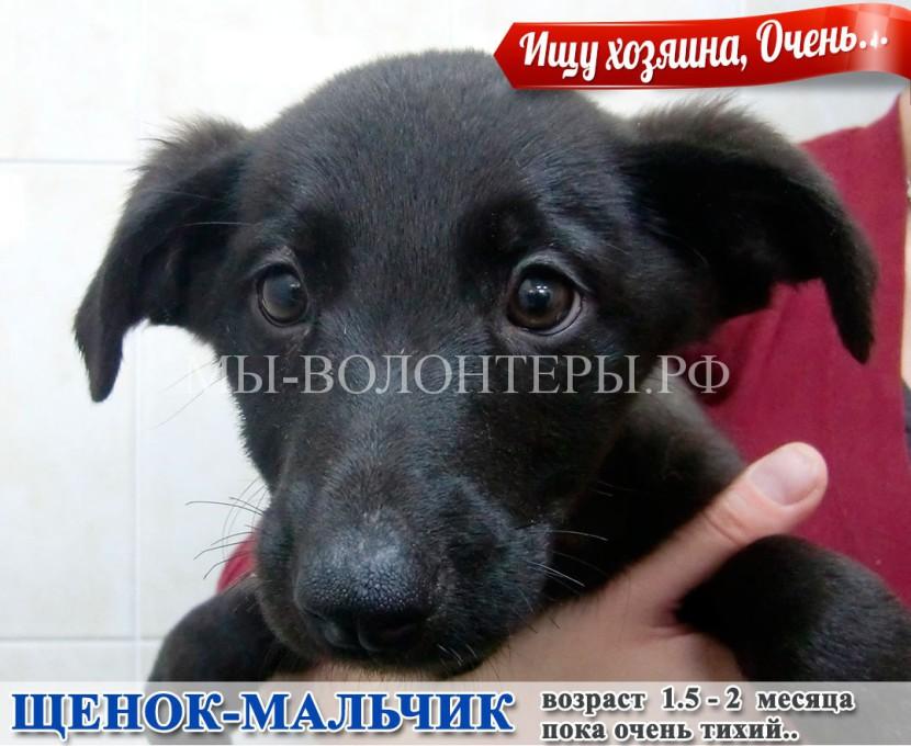 Беспомощному щенку срочно нужен дом и уход, поможем !