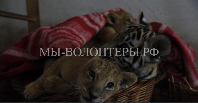 Как крымские зоопарки переживают энергоблокаду