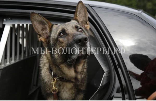 Американцу может грозить семилетний тюремный срок за оскорбительные действия в адрес полицейской собаки