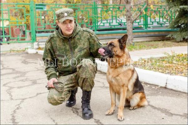 Овчарка Зара с саратовской таможни — уникальная собака, каких в стране единицы