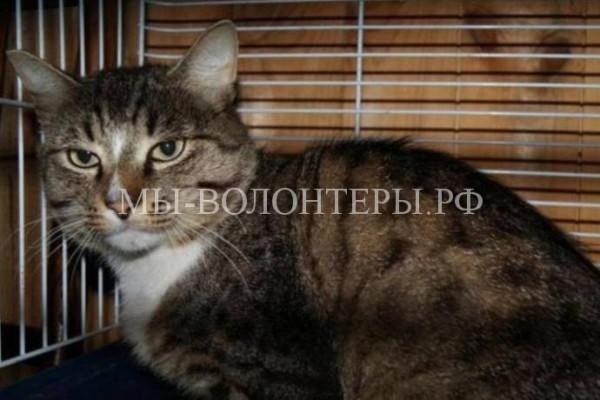 Уральский кот преданно ждал хозяев, которые его бросили