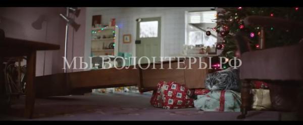 Рождественская реклама с трогательным неуклюжим котом