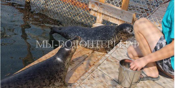 Слепой тюлененок с Сахалина приехал в Анапу