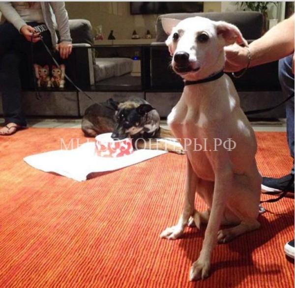 Спасенным собакам возвращают доверие к людям