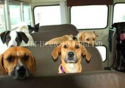 Правила поведения собаки в общественном транспорте