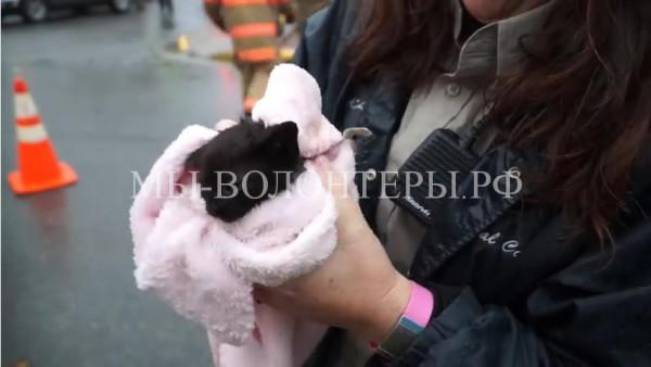 Спасение котенка из сточного колодца