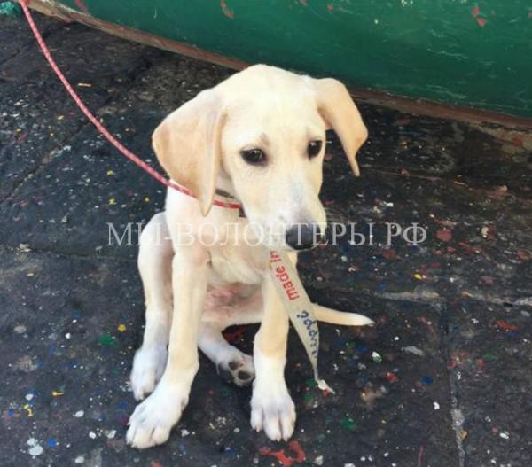 Спасение щенка, который пробыл в открытом океане несколько часов