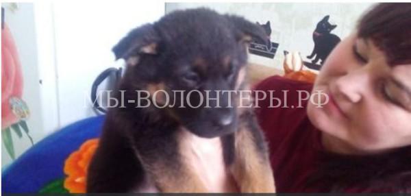 На Урале пассажиры автобуса спасли щенка, которого хозяин бросил на проезжую часть