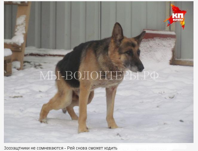 уральцы спасли собаку5