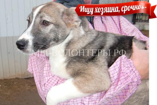 Ласковая девочка-щенок срочно ищет хозяина, поможем !