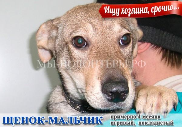 Игривый щенок-мальчик, нужны  любящие хозяева