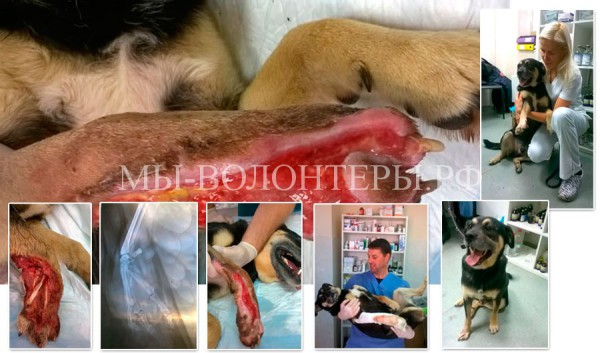 Яценко С.Н. Современные подходы  в лечении ран животных, которые мы применяем в нашем приюте.