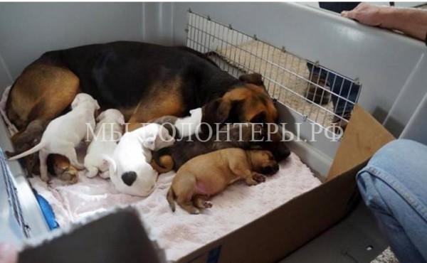 Эта собака приняла чужих щенков, которых хотели утопить