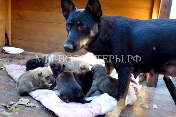 В Ейске собака спасла девять щенков из затопленной трубы