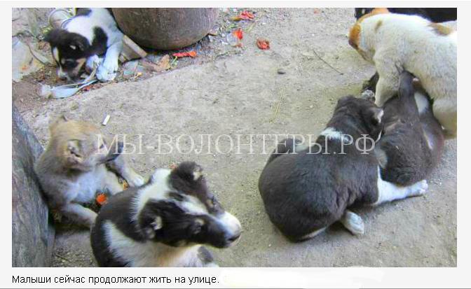 Собака спасла щенят 3