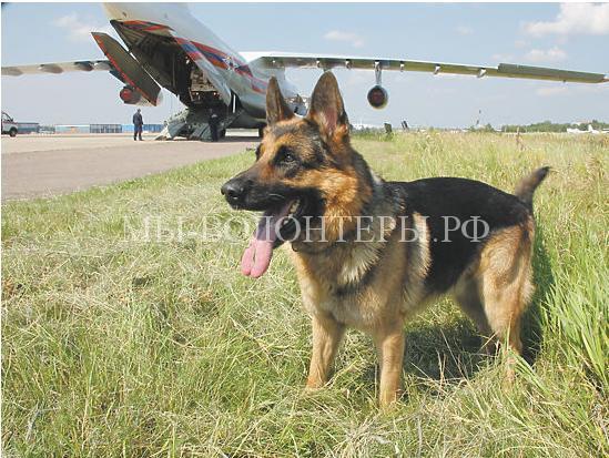 Собаки на службе в МЧС