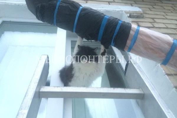 Спасатели вытащили застрявшего в окне кота с помощью рулона линолеума