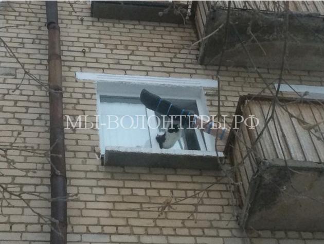Спасение кота, застрявшего в окне2