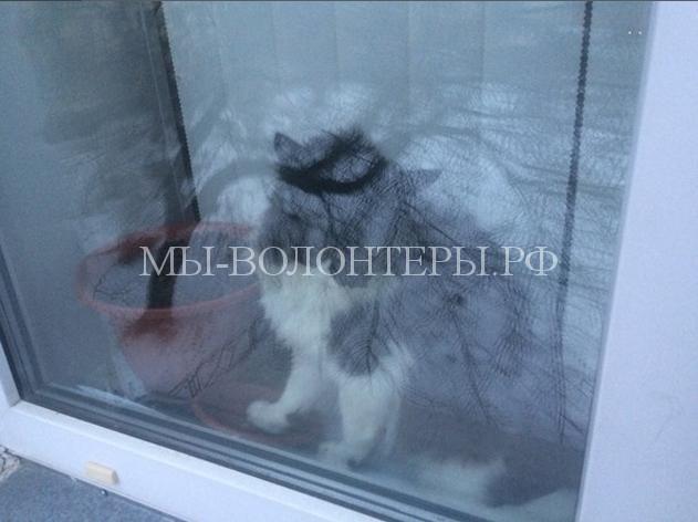 Спасение кота, застрявшего в окне3