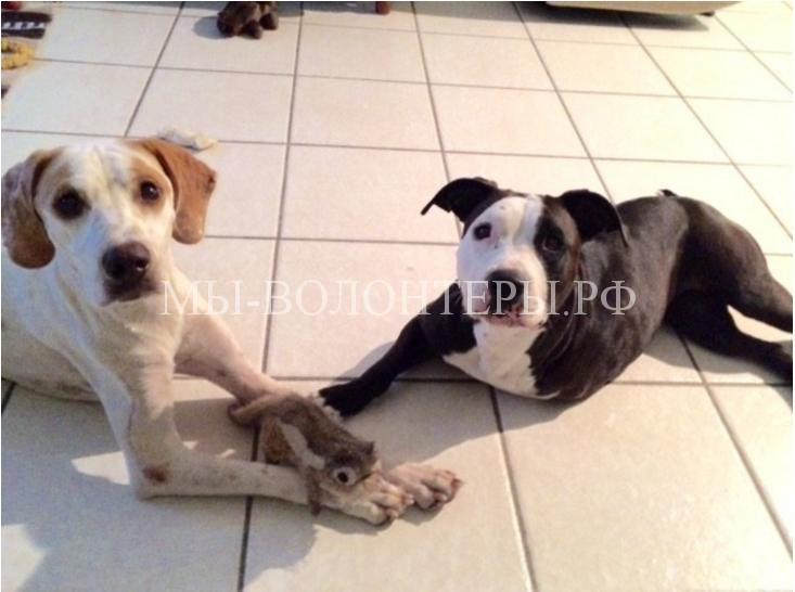 Спасение собаки со сломанными лапами3