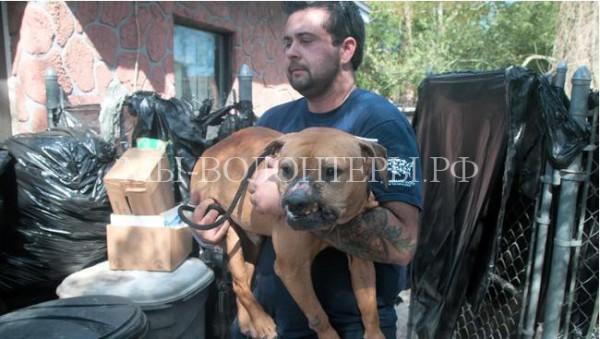 Спасение собаки, которую использовали в собачьих боях