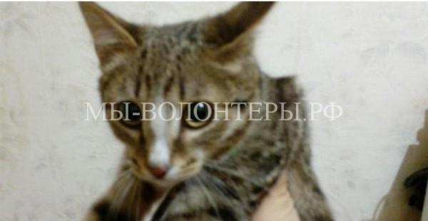 В Белорецке кот забрался под капот и … нашел себе нового хозяина!