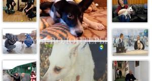 Телекомпания МИР сняла сюжет о наших Айке, Айсе, приюте Щербинка и волонтерах