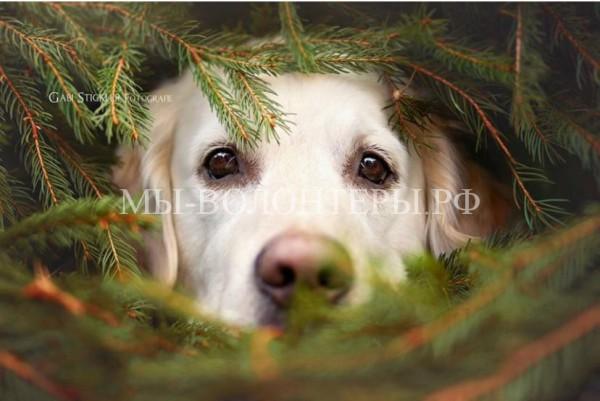 Рождественские фотографии с любимыми питомцами
