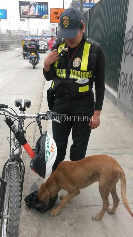 полицеские в Перу спасают собак3