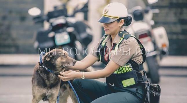полицеские в Перу спасают собак4