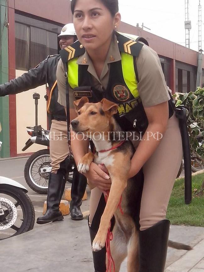 полицеские в Перу спасают собак5