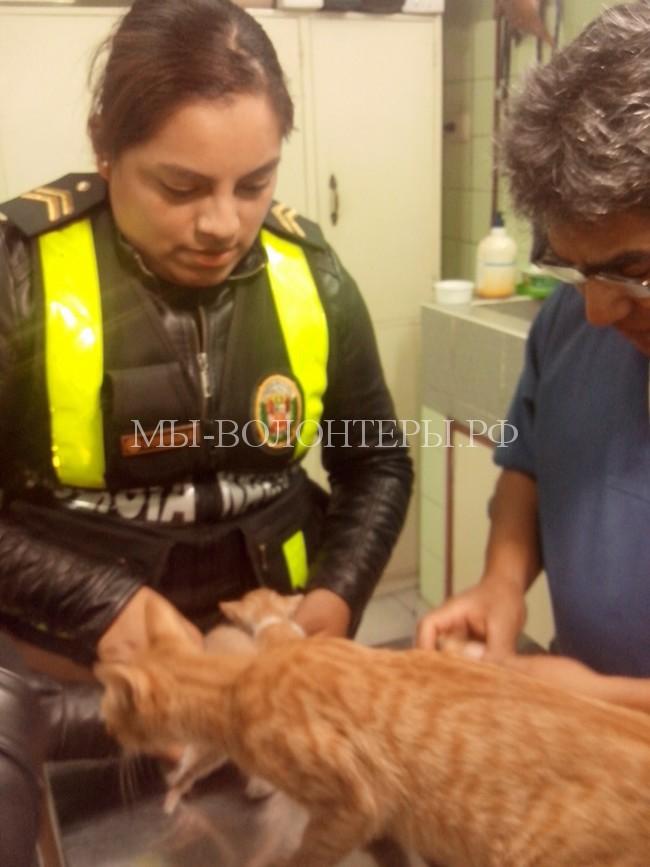 полицеские в Перу спасают собак6