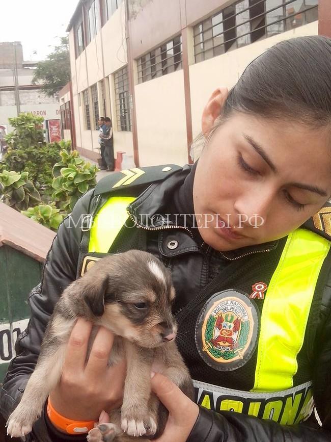 полицеские в Перу спасают собак7