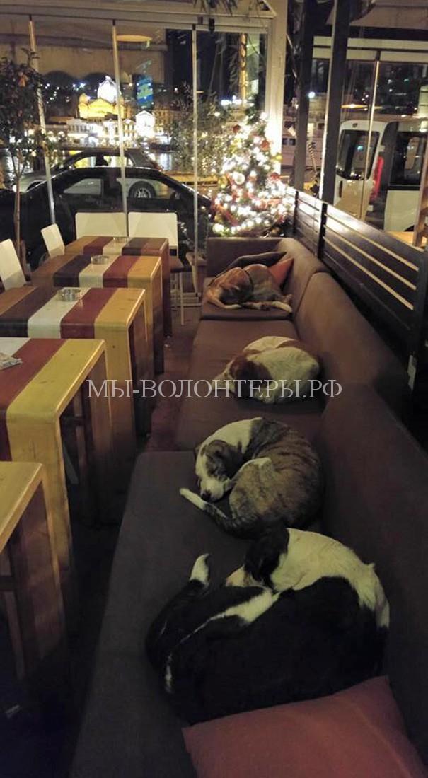 Хозяева греческого кафе пускают бездомных собак ночевать в пустом зале