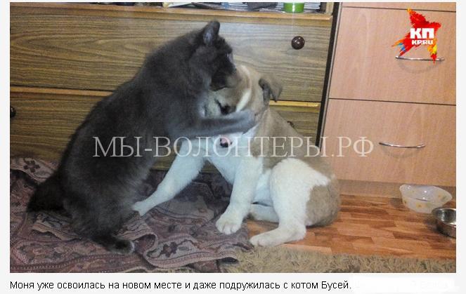 спасение щенка в Перми3