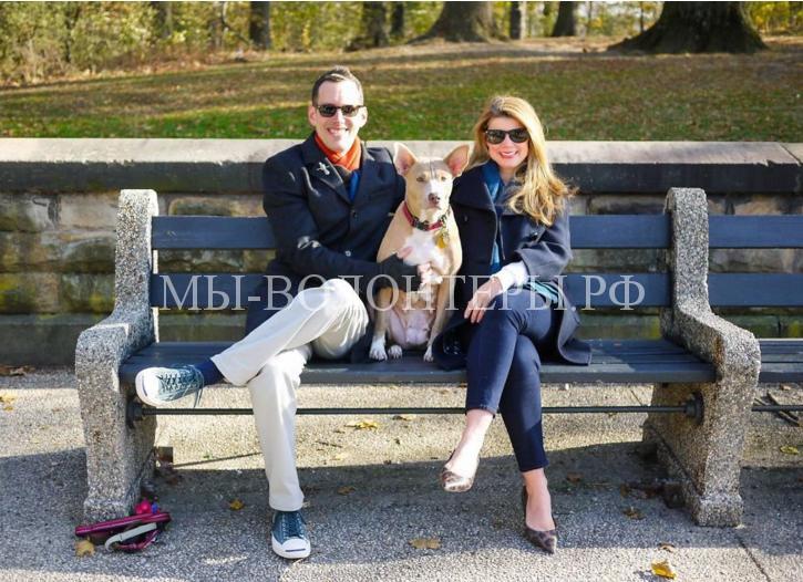 Более 200 семей, спасших собак, сфотографировались в надежде вдохновить других на тот же поступок