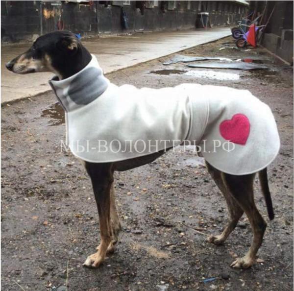 Эта женщина обеспечивает бездомных собак в приюте теплой одеждой