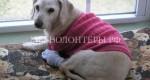 Как сделать жизнь пожилой собаки более комфортной