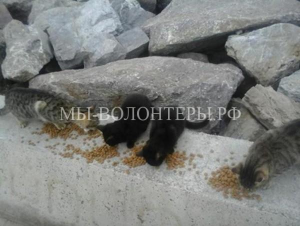 Женщина заботится о 350 бездомных кошках