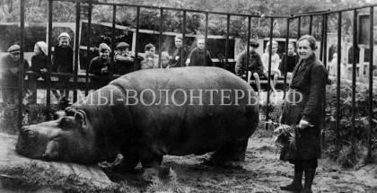 Подвиг работников Ленинградского зоопарка: как люди помогали животным пережить блокаду