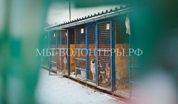 Российские муниципальные приюты для животных и их зарубежные аналоги
