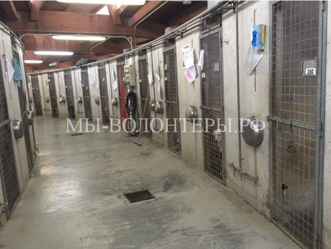 Приюты для бездомных животных4